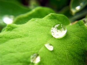свойства и состав сточных вод
